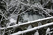Washington Photos - Whatcom Falls winter 08 by Craig Perry-Ollila