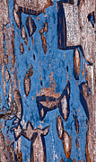 Peeling Paint Walls Posters - Whats Left Of The Blue Paint Poster by James Steele