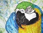 Macaw Mixed Media - Whats Up by DJ Laughlin