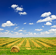 Clouds Photo Prints - Wheat farm field at harvest Print by Elena Elisseeva