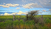 Horse And Buggy Posters - Wheat Field Fence Line Poster by Steve McKinzie