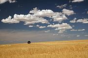 Kenny Chaffin - Wheat Field with Tire