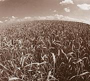 Wheatfields Photo Prints - Wheat Fields Forever Print by Steven Huszar