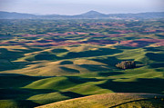 Flower Field Posters - Wheat Fields of Palouse Poster by Lee Chon