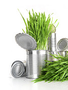 Recycling Photos - Wheatgrass in aluminium cans on white by Sandra Cunningham