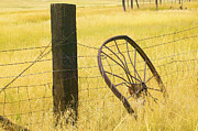 Barbed Wire Fences Posters - Wheel looking for a Tractor Poster by Rich Franco
