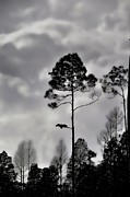 Grey Clouds Photo Prints - When The Air Gets Too Thin Print by Jan Amiss Photography