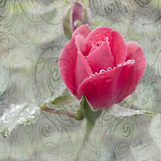 Dew Mixed Media Prints - When The Dew is on the Rose Print by Betty LaRue