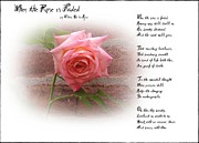 Rose - When the Rose is Faded by Bill Cannon
