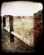 Barbwire Photos - When Time Fades by Trish Mistric