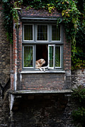 Attentive Labrador Dog Photos - Where Is My Dinner by Jason Smith