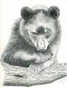 Bear Drawings - Where by Joette Snyder
