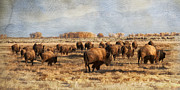 Bison Digital Art - Where the Buffalo Roam by Judy Neill
