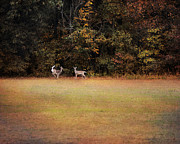 Autumn Landscape Art - Where the Deer Play by Jai Johnson