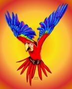 Macaw Drawings - Where Was I Suppose to Land by Sheryl Unwin