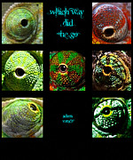 Chameleon Paintings - Which Way Did He Go by Adam Vance