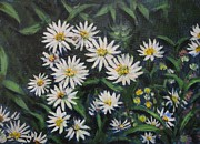 Aster  Painting Framed Prints - Whie Asters Framed Print by Usha Shantharam