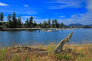 Sooke Prints - Whiffin Spit and the Harbor at Sooke Print by Louise Heusinkveld