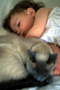 Cat Portraits Posters - While Baby Sleeps Poster by Kathy Yates