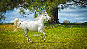 White Unicorn Photos - Whimsical Horse by Steve McKinzie