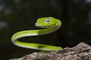 Gary Bridger - Whip Snake