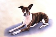 Whippet Dog Framed Prints - Whippet Framed Print by Lucy Deane