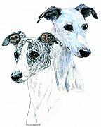 White Dog Drawings Framed Prints - Whippet Pair Framed Print by Kathleen Sepulveda