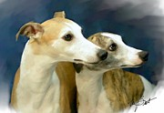 Whippet Dog Framed Prints - Whippet Watching Framed Print by Maxine Bochnia