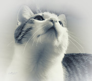 Whiskers Print by Jutta Maria Pusl
