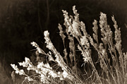 Breezy Metal Prints - Whisper Gently Metal Print by Carolyn Marshall