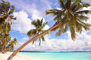 Best-selling Prints - Whispering Palms. Maldives Print by Jenny Rainbow