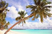 Whispering Palms. Maldives Print by Jenny Rainbow