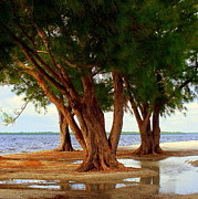Tropical Islands Posters - Whispering Trees of Sanibel Poster by Karen Wiles