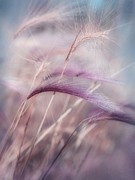Pink Flora Prints - Whispers In The Wind Print by Priska Wettstein