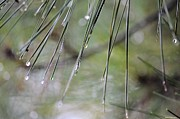 Whispers Of An Autumn Rain Print by Maria Urso
