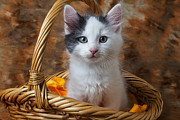 Baskets Photos - White and gray kitty by Garry Gay
