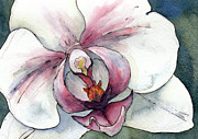 Watercolor Print Posters - White and pink Orchid Poster by Cherilynn Wood
