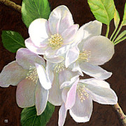 Theresa Evans - White Apple Blossom