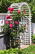 Red Flower Photos - White arbor in a garden by Elena Elisseeva