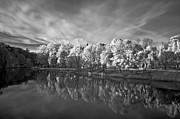 White Autumn Print by Arvydas Kantautas