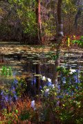 Tree Reflections In Water Posters - White Azaleas in the Swamp Poster by Susanne Van Hulst