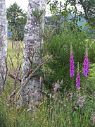 Foxglove Flowers Photos - White Bark and Foxglove by Pamela Patch