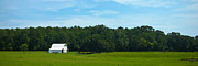 Natchez Trace Prints - White Barn Blue Sky No. 1 Print by Phil Brown