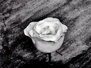 Edges Digital Art - White Beauty Rose by Marsha Heiken