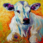 Cattle Ranch Prints - White Calf Print by Marion Rose