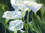 Realistic Watercolor Prints - White Calla Lilies Print by Sharon Freeman