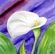 Calla Lily Paintings - White Calla Lily Purple Mood by Ann Troe