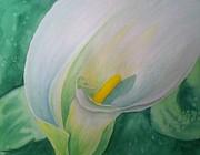 Calla Lilly Painting Framed Prints - White Calla Lily Framed Print by Stephanie Reid