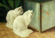 Oil Cat Paintings - White Cats Watching Goldfish by Arthur Heyer