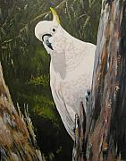 Cockatoo Painting Framed Prints - White Cockatoo Framed Print by Leonie Bell